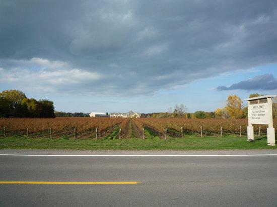 Niagara Getaway Wine Tours