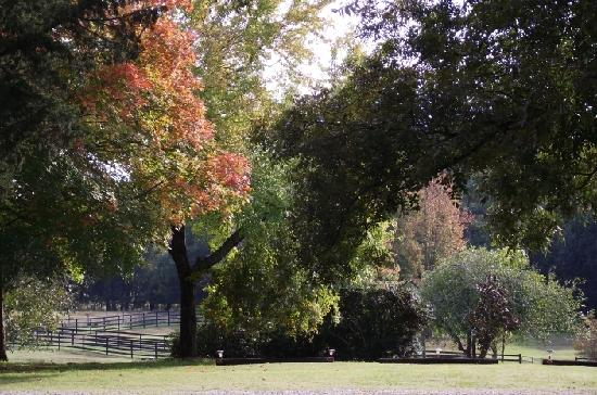 The Colonels: The grounds with fall colors