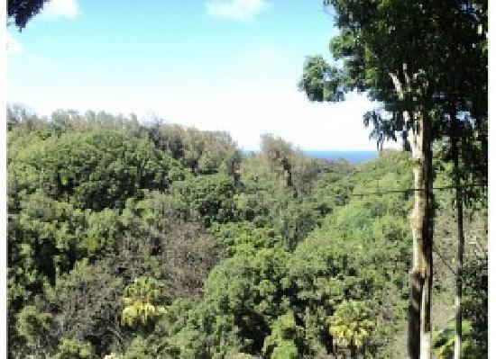 Big Island Eco Adventures II Zipline Canopy Tour: Zip Line on the Big Island