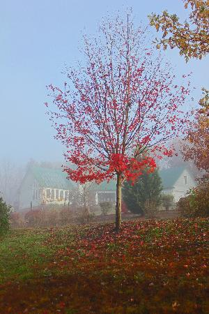 Pinnacle View Inn: Foggy Morning
