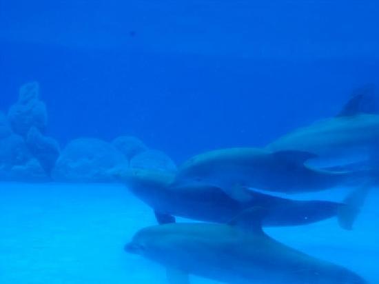 Dolphin encounter: underwater viewing area