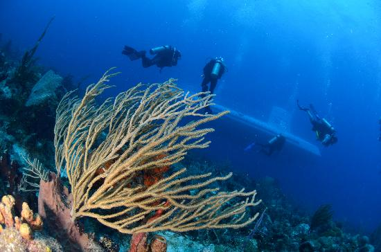 Bridgetown, Barbados: Diving with the sub in Barbados