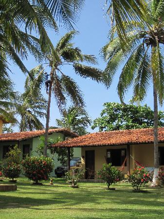 Itacimirim, BA: élagage des cocotiers