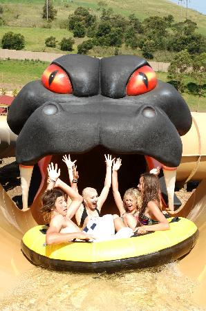 Jamberoo, Australia: Dare to ride the Taipan