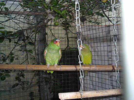 Jim's Pizza : Adorable resident birds