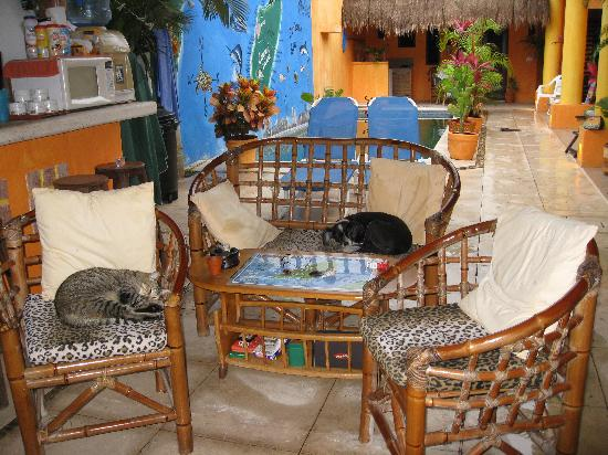 Casita de Maya: Trixie and Kitty