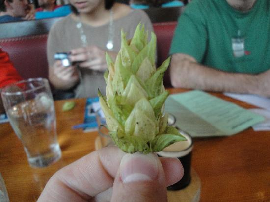 Pubs of Portland Private Tours: Chinook Hops