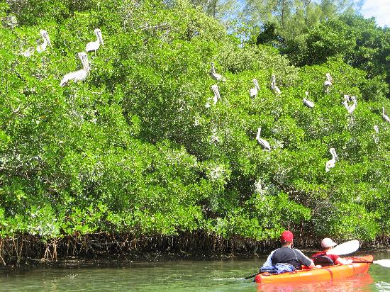 Almost Heaven Kayak Adventures: check out the birds on the trees