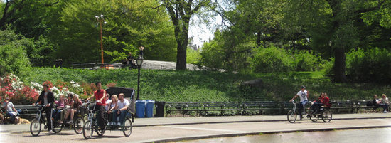 Central Park Pedicab Tours : Pedicabs on the roll