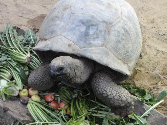Valbrembo, Italie : madame tortue et son repas