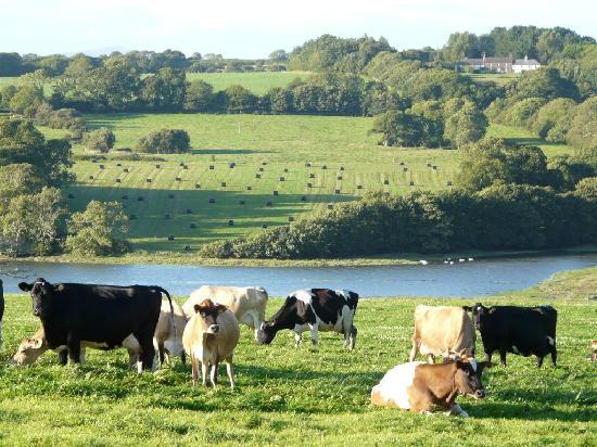 Lawrenny Millennium Hostel: Farmland and water at Lawrenny