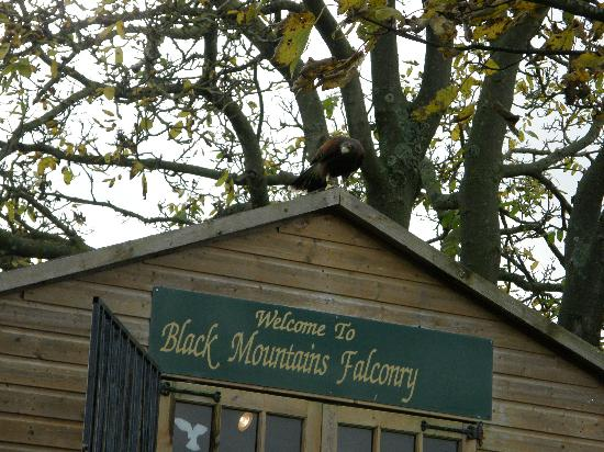 Black Mountains Falconry Centre: The 'Office'