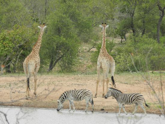 Wild Wings Safaris: Game galore