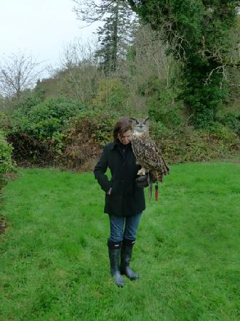 the g Hotel & Spa Galway: Falconry in Ireland