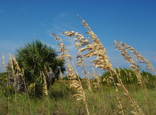 Cayo Costa State Park: Only the Sound of the Wind