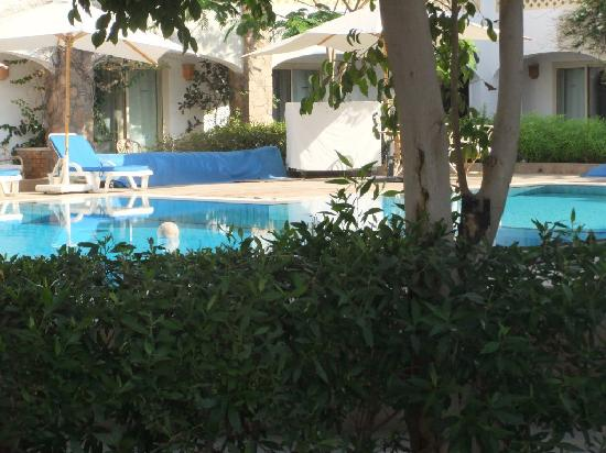 Camel Dive Club & Hotel: Nobody in the pool