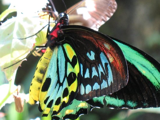 Coconut Creek, FL: Colorful butterfly at Butterfly World