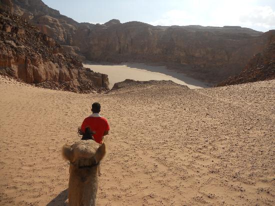 Sinai Safari Adventures : Camel ride, Wadi Ghazala