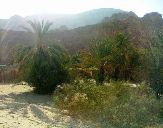 Sinai Safari Adventures : Oasis Ain Khudra