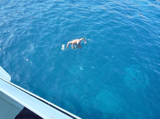Navetta Sea Star : In mezzo ai pesci