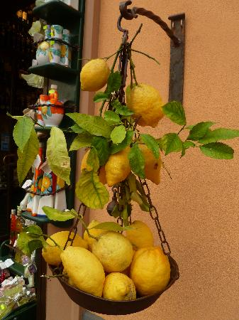 Best Tour Of Italy: Enormous Lemons in Sorrento