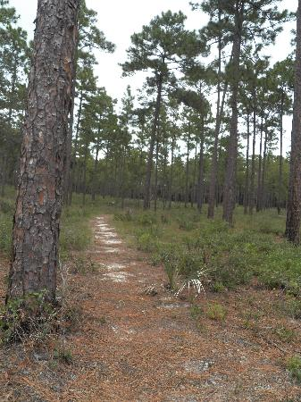 Ocala National Forest : Hiking trail at Clearwater Lake