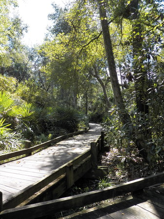 Umatilla, FL: Boardwalk at Juniper Springs