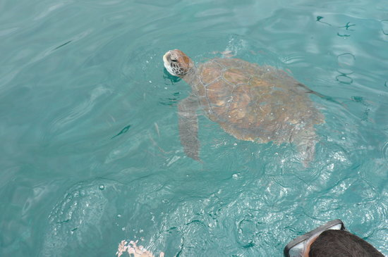 Adeje, Spanje: Sea Turtle