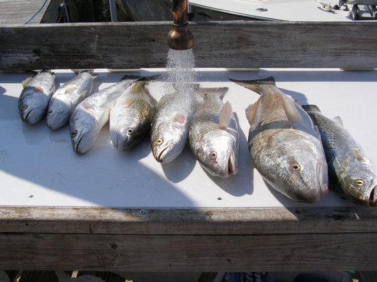 Everglades Fishing Charters: Lunch