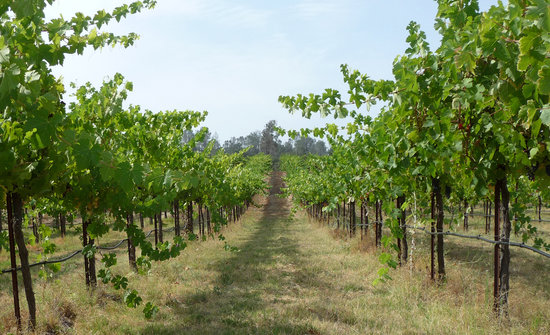 Madera Wine Trail: Madera County Vineyard