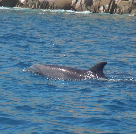 Cabo Outfitters : Dolphin at Cabo Pulmo