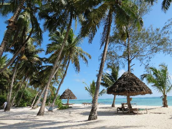 Pongwe Beach Hotel: Beautiful grounds
