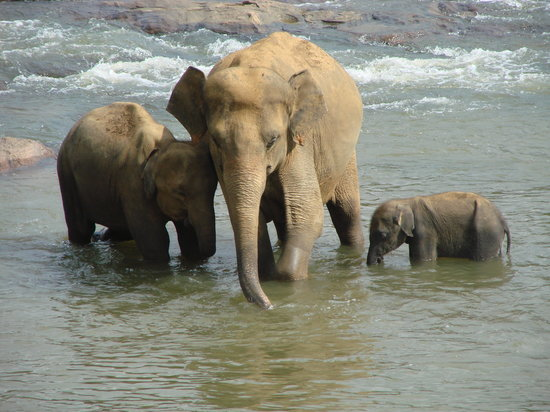 Pinnawala Elephant Orphanage: mother and daugthers