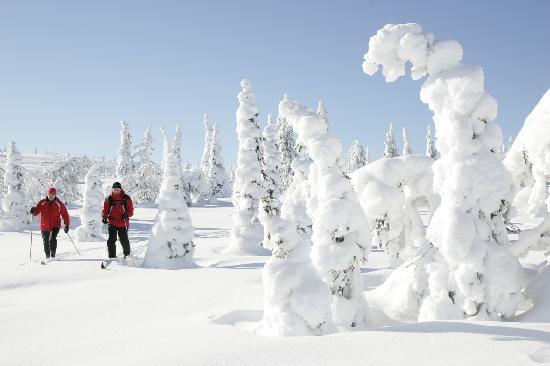 Riisitunturi National Park : Skiing in Riisitunturi in the winter