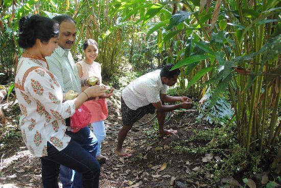 The Shade: Owner Mr Santosh showing us Cardomum crop
