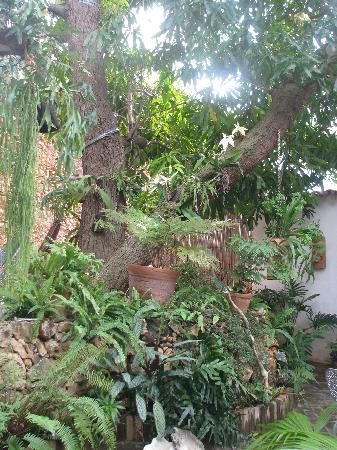 Hostal Casa Colonial el Patio: Patio