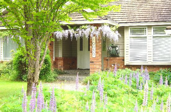 Gord's Little Acre B & B: Wisteria and Lupines in the Springtime