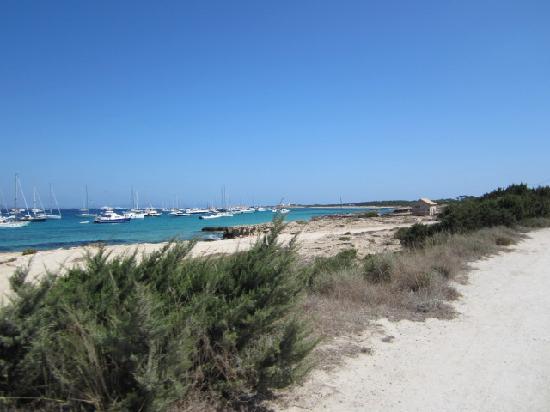 Playa de Ses Illetes: きれいな海