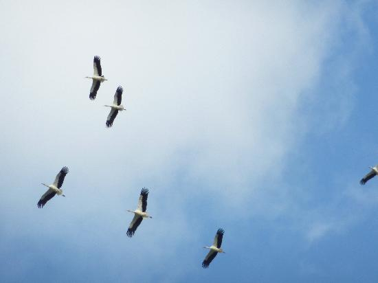 Alvor Boat Trips: Storks, some of the many birds to see