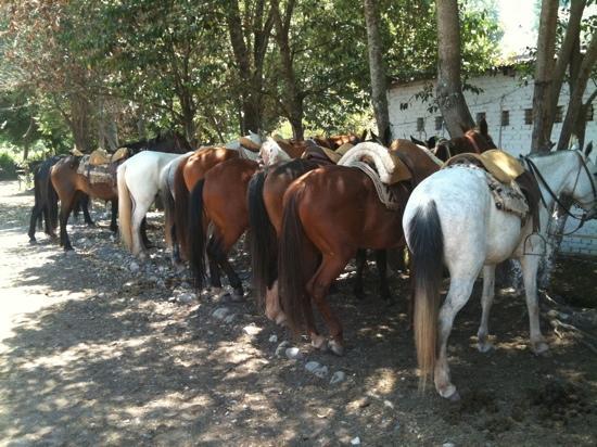 SAYTA Ranch - Horseback Riding Tours: the horses