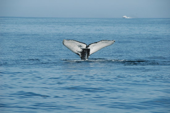 Whale Watching & Fishing Tours