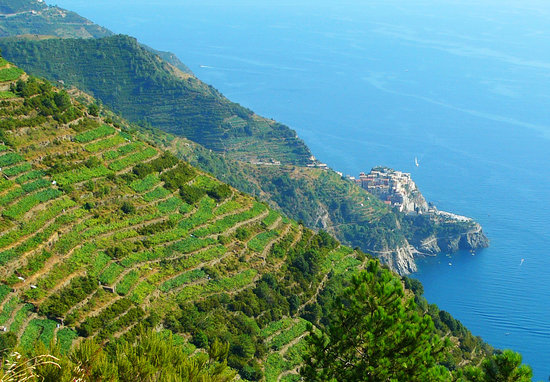 CTTours - Cinque Terre Private Tours and Shore Excursions