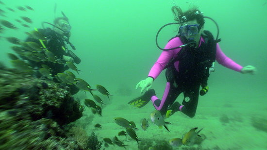 Vallarta Under Sea