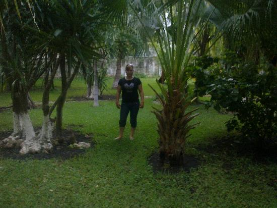 Real Playa del Carmen: jardines del hotel