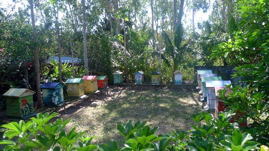 Cases a Gardenias: Les ruches de Case Gardenias