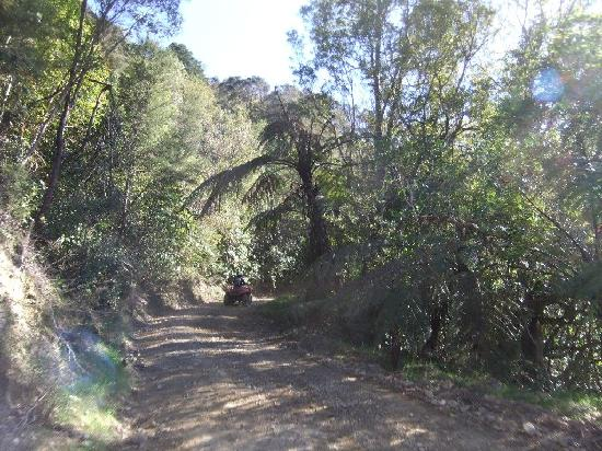 Cable Bay Adventure Park: Beautiful vegetation