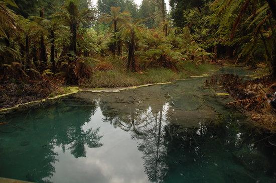 Redwoods, Whakarewarewa Forest: Redwood forest