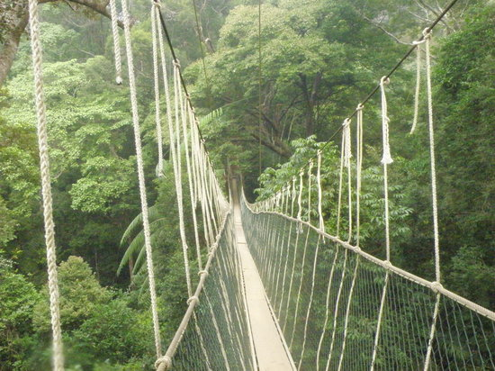 Taman Negara National Park : Canopy Walk