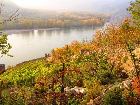 Vienna Explorer - Touren und Fahrradverleih: View of the Danube