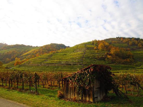 Vienna Explorer - Touren und Fahrradverleih: Vineyards